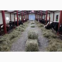 Проектирование строительство малых ферм КРС, КОЗ, под ключ работаем по госпрограммам