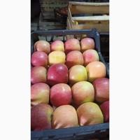 Продаем яблоки с Азербайджана
