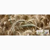 Корма для с/х животных: овес, ячмень, пшеница, кукуруза, жмых, жом, шрот, отруби