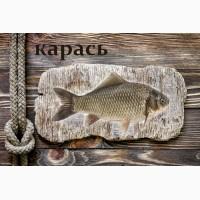 Живая рыба Карась для пруда