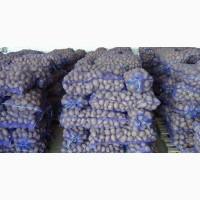 Картофель оптом от 20 тонн отличного качества