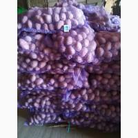 Картофель качественный, со склада