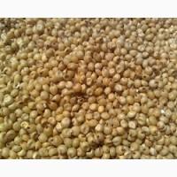 Фуражное зерно: сорго зерновое от 20 тонн