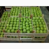 Яблоки сорта Семеренко опт