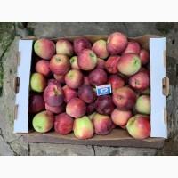 Яблоки Фларина