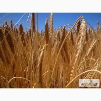 Кормовые культуры и прочие корма