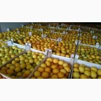 Лимон в любых объемах напрямую от производителя