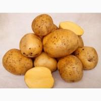 Картофель (клубни)