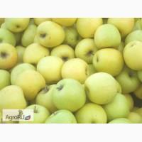 Яблоки из Беларусии