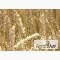 Пшеница, овес, ячмень, кукуруза, жмых, шрот, отруби