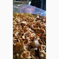 Продаю грибы лисички замороженные