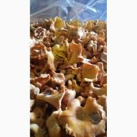 Продаю грибы лисички свежие