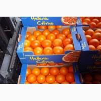 Апельсины оптом отличного качества