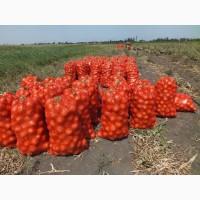 Лук крупный оптом в Ростовской области
