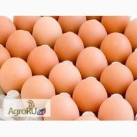 Яйцо С0 отборное оптом