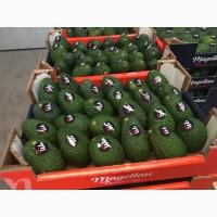 Продаем авокадо из Испании