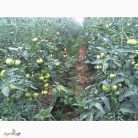 Продам фермерское хозяйство 25 Га