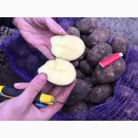 Картофель Винета калибр 5