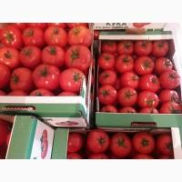 Продаем помидор
