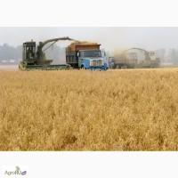 Фуражное зерно с доставкой по области