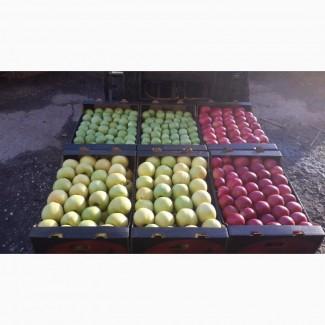 Яблоки, на постоянной основе