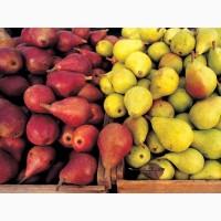 Предлагаем приобрести по привлекательной цене груши различных сортов оптом