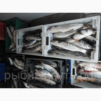 Крымская рыба и морепродукты оптом от производителя в Керчи