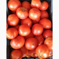 Помидоры (томаты) грунтовые калиброванные оптом от производителя