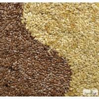 Семена масличного льна