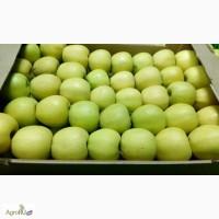 Продаю яблокИ Голден