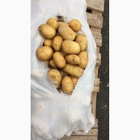 Качественный молодой картофель напрямую от производителя