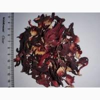 Продаю цвет Гибискуса