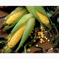 Гибриды семена кукурузы Пионер (Pioneer)