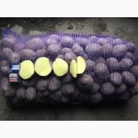 Картофель оптом 5+ со склада