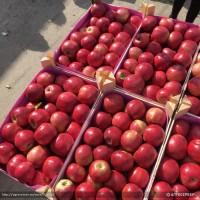 Яблоки все сорта от 20 тонн Молдова