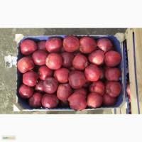 Продам яблоки в Москве