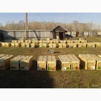Продам пчелопакеты (карника)