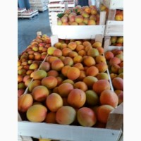 Спелые абрикосы оптом по выгодной цене