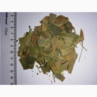 Гингко билоба, лист