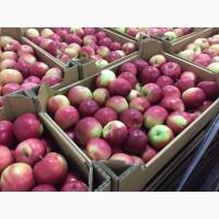 Поставки яблок