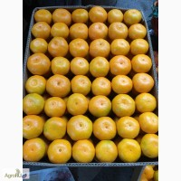 Мандарины Абхазия оптом от 43 руб./кг