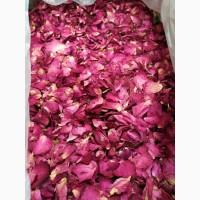 Роза красная лепестки крупные (оптом от 5кг)