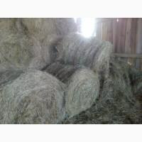 Продаем высококачественное сено/сенаж амбарного хранения