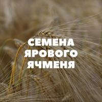Семена ярового ячменя