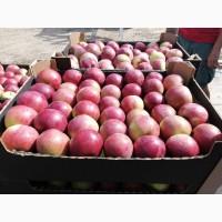Яблоки беларусские