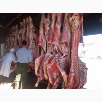 Мясо быка в полутушах