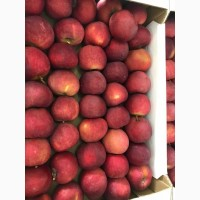 Яблоки оптом от производителя Москва