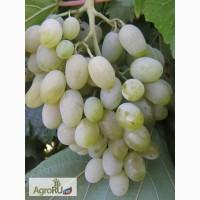 Саженцы и черенки винограда районированные