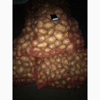 Продажа картофеля продовольственного, фракция 6