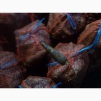 Морковь оптом от 3 тонн